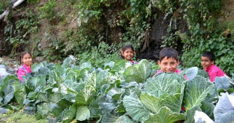 Kids and cabbages