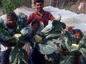 Cauliflower kids